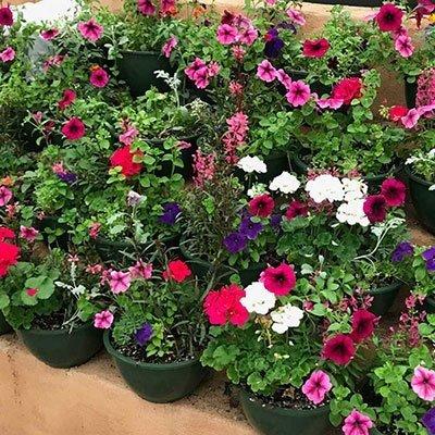 Summer Flower Mixes